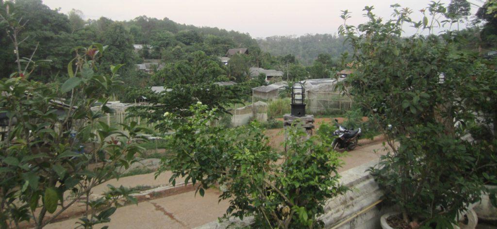 1 AURA PES PK Village